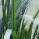 Sommerakademie Worpswede, Fotokurse, Fotoworkshops, Malreisen, Malkurse, Struktur malen, Natur